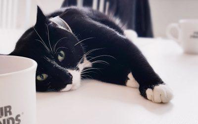 sören fernström sveriges mest klappade katt