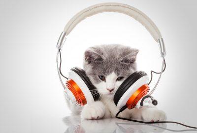 Kattunge med alldeles för stora hörlurar på sitt huvud.