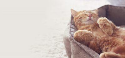 Röd huskatt som sover på rygg i en kattsäng.