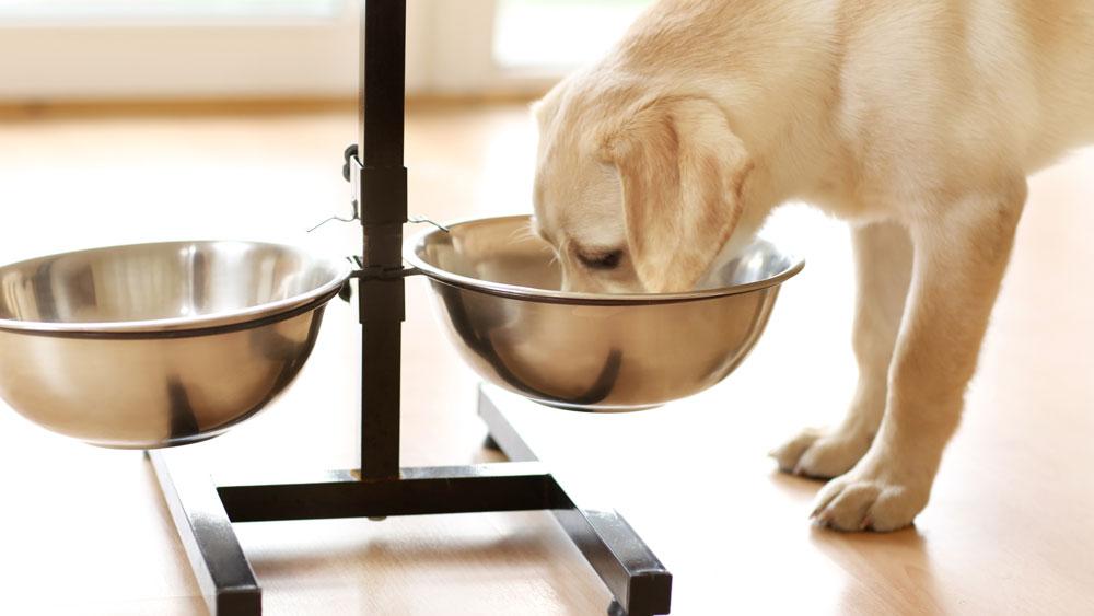 Hund äter ur hög matskål.