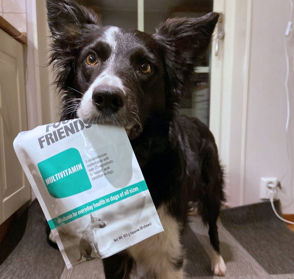 Border Collie håller i en FourFriends Multivitamin
