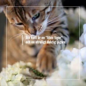 Film FourFriends kattmats kampanj