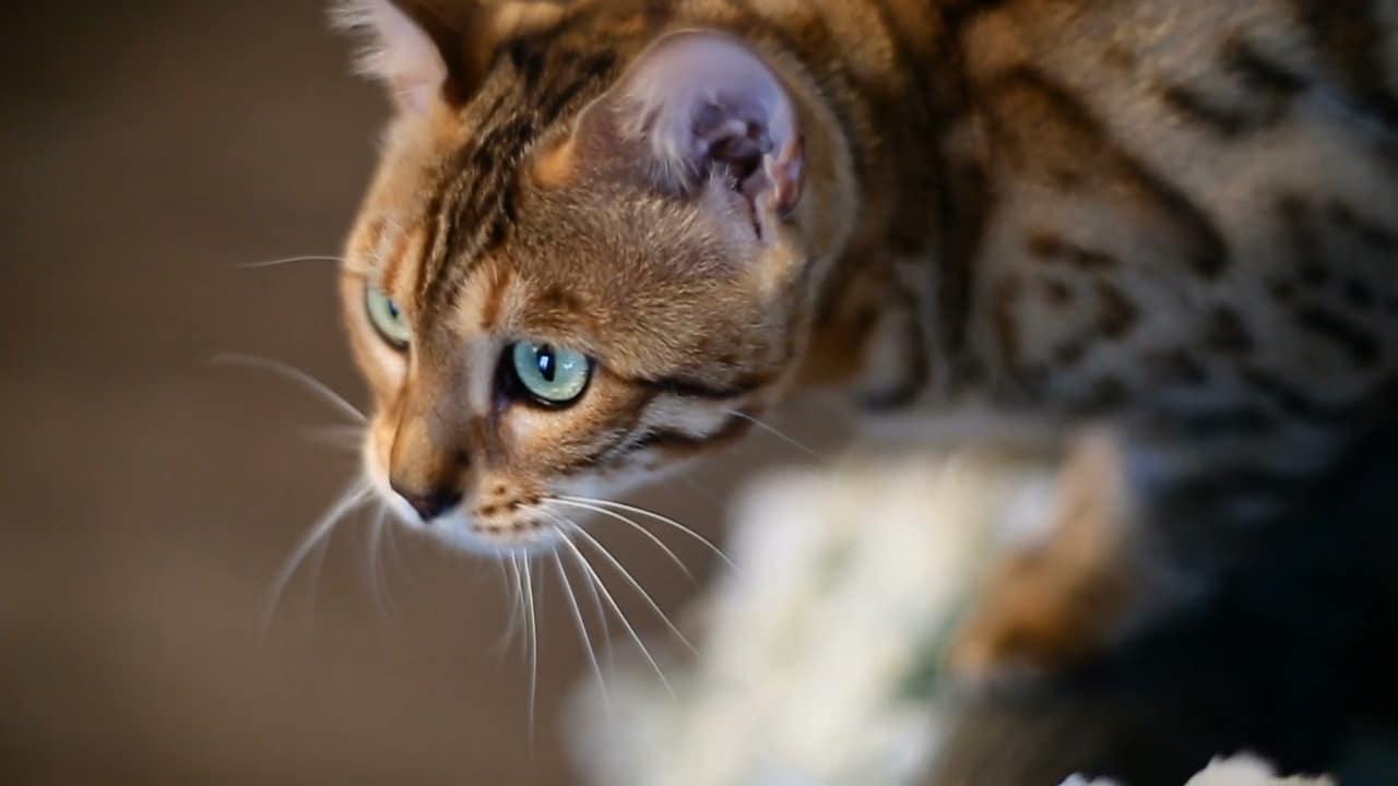 Kattsand hälls i en kattlåda